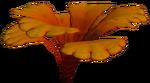 Orange Petals Plant Flora