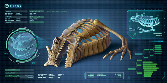 Fox3d-entertainment-seadragonskeleton