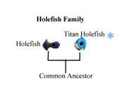 Holefish Family