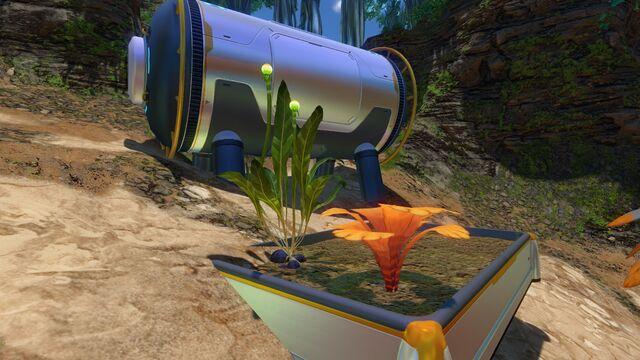 File:Purple Vegetable Plant.jpg