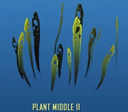 Plant Middle 11