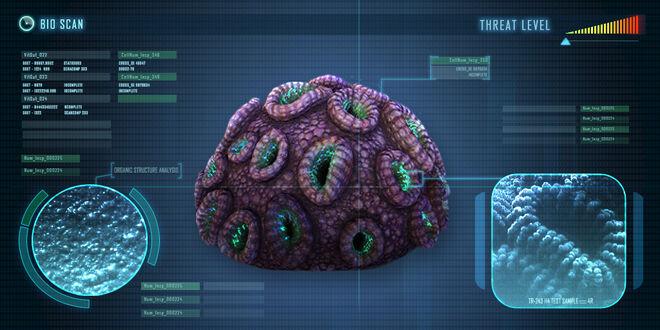 Braincoral
