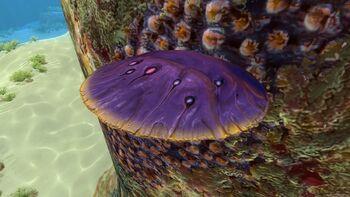 Пурпурная