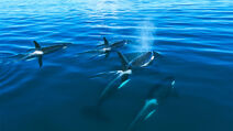 Orca 16x9 0