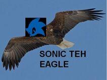 Bald eagle adult2