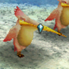 Raparo Bird