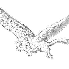Gryphowl