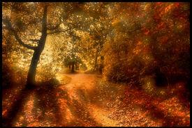 Sunleaf woods