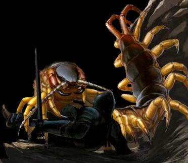 Large Centipede