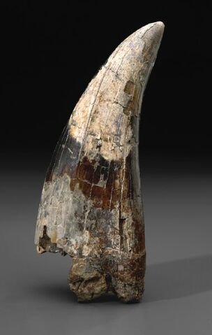 File:Tooth of a Beast.jpg