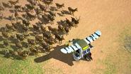 Wildebeest5