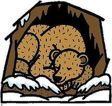 Hibernating-bear-clipart-9