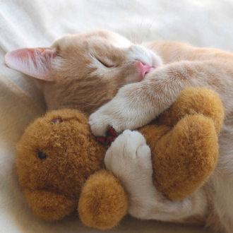 File:Hugs2.jpg
