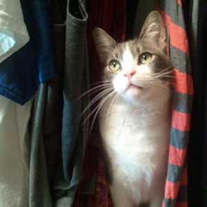 File:Catcloset.jpg