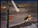 Vlcsnap-1959687