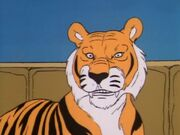 Tiger (2b - Tiger on the Loose) 2