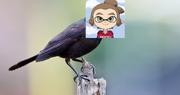BirdRedCheez