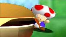 Toadystuckonhamburger