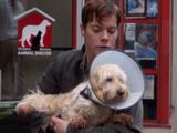 Jeffrey's dog