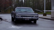 Impala's back