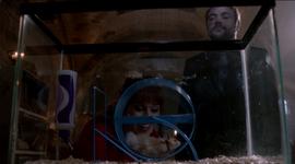 525px-HamsterOlivette