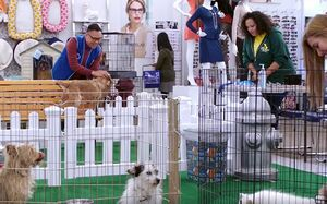 S02E05-Dog adoption station