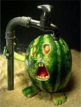 Parchedwatermelon