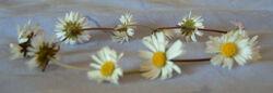 Daisy chain wiki