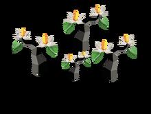 Initial version of Yadakk forest