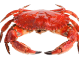 The Crustacean of Creation