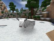Albino bull