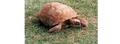 Turtle4wiki.png