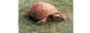 Turtle4wiki
