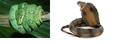 Snake4wiki.png