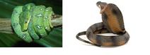 Snake4wiki