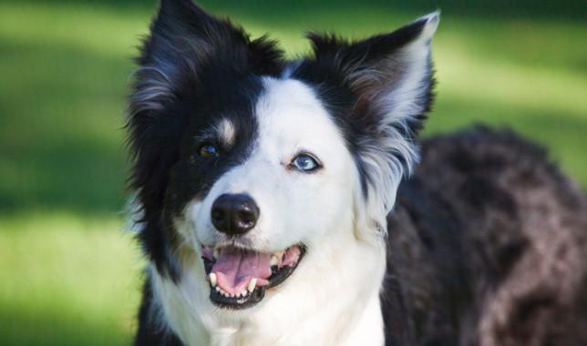 Swift | Survivor Dogs fanfiction Wiki | FANDOM powered by Wikia
