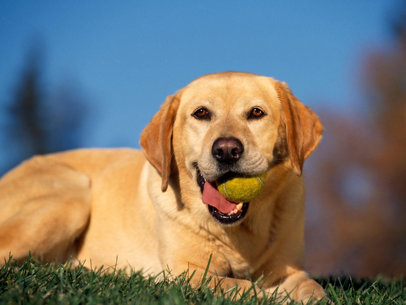 Wasp | Survivor Dogs fanfiction Wiki | FANDOM powered by Wikia