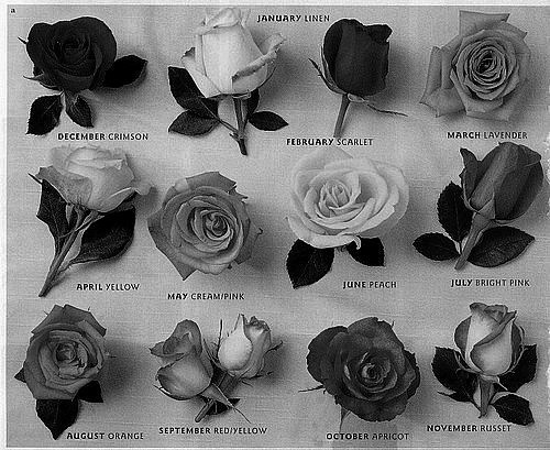 Image white flowers tumblrtumblr backgrounds black and white white flowers tumblrtumblr backgrounds black and white flowers vintage drawing and kd6krbmtg mightylinksfo
