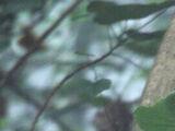 Jungle Relay