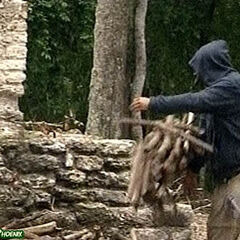 Judd collecting firewood.