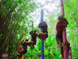 Survivor NZ: Thailand Episode 13
