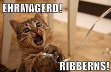 Cat memes 05-1-