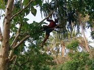 Survivor.Vanuatu.s09e04.Now.That's.a.Reward!.DVDrip 440