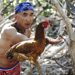 Tai with a chicken.