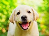 Собачка-на-поводочке