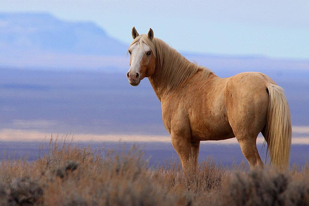 horse survivors by erin hunter wiki fandom powered by wikia