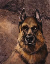 Survivors Dogs Bruno