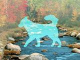 Собака-Река