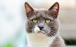 Term.cat