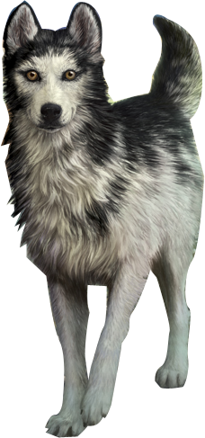 alpha dog wiki